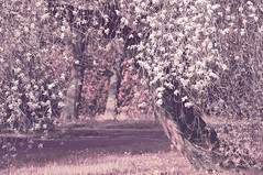 Around a sweet flowering tree, one finds placidity (Paulina_77) Tags: pink flowers trees light white flower tree nature floral leaves vintage garden cherry landscape botanical leaf spring flora cherries nikon scenery soft poetry mood branch moody blossom sweet outdoor pastel branches magic softness dream mother atmosphere scene poetic pale sensual retro foliage pastels bloom romantic botanic buds dreamy bud lovely nikkor hazy delicate dreamlike tones magical daydream atmospheric pinkish gentle springtime muted subtle blooming springlike d90 bloomy placidity 55300 nikond90 55300mm 55300mmf4556 nikkor55300mm pola77 55300mm4556