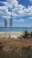 Beachlife (didunn29) Tags: seascape beach cacti dunes coastal costablanca scenicsnotjustlandscapes