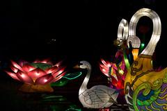 _DSC9577_2 (Elii D.) Tags: light fish flower animal night zoo monkey neon dragons lantern lampion dargon