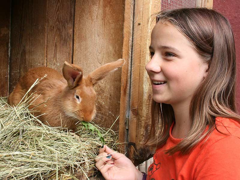 Ferienwohnungen Selz - Mädchen füttert Hasen