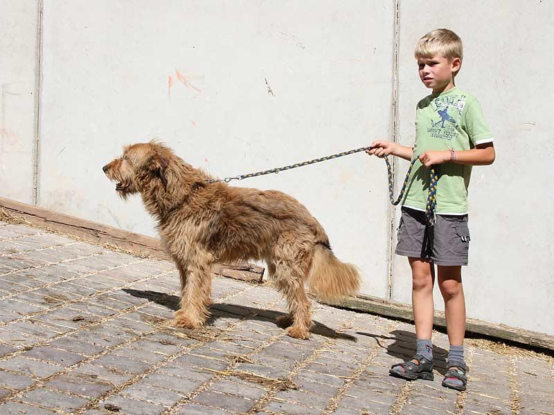 Ferienhof Hausmann - Junge geht mit Hund spazieren