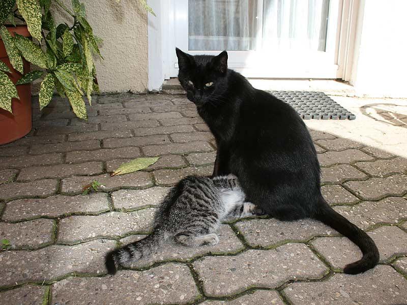 Lindenhof Hausmann - Katzen