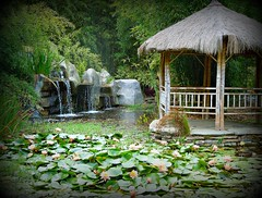 ~~BaMBoO GiaNT NurSeRy #3~~ (TravelsThruTheUniverse) Tags: waterlilies ponds tropicalplants tropicalflowers exoticgardens waterfeatures zengardens exoticflowers asiangardens summergardens tropicalgardens tropicalfoliage californiagardens waterinthegarden subtropicalgardens tropicallandscapes mygearandme ringexcellence dblringexcellence subtropicallandscapes rememberthatmomentlevel1