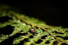 (NATUSHCAH) Tags: insectos animals animales cucarron