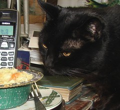 """""""Co-op,"""" the cat (EcoSnake) Tags: friends cats pets loving dinner cat coop companions"""