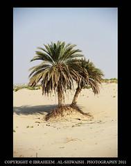 36 (Ibrahim Al-Shiwaish) Tags: photographer             gpcenter   5diii     ibrahimalshiwaish  ksaphotographer