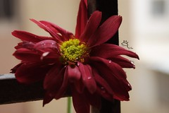 project     (1/3) (  ) Tags: camera morning flowers light red sun white green window beautiful canon de lens hope is photographer photographic monia said 500  optimism the happier          a    fahid  of