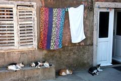 Siesta (derNubo) Tags: door cats window europe niceshot croatia adria dalmatia ipan ipanskaluka