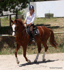 Neuland's Perle (neulands) Tags: horse sarah cheval mare pferd perle stute neulandstud
