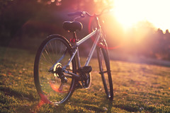 A trip to the park in the afternoon (In my entirety) Tags: sunset sun grass bike canon lens eos rebel 50mm prime golden kiss open f14 wide flare usm ef xsi x2 450d