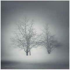 \I/    \I/ (Samantha Nicol Art Photography) Tags: blue trees winter mist snow blur art ice nature silhouette fog golf square nikon atmosphere course samantha vignette nicol beith idream