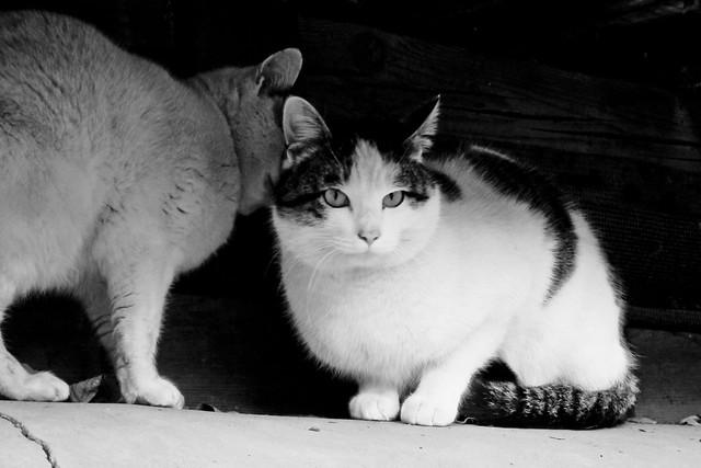 Today's Cat@2011-12-28