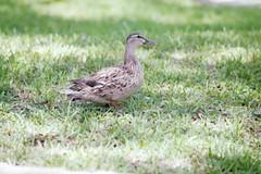 flower home dock southcarolina ducks beachlife guyharvey