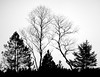Silhouette (hiasl_3) Tags: bw silhouette st sw moor bäume baum penzberg filt johannisrain gettygermanyq4