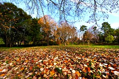 MIG_2856 (Miguel Tavares Cardoso) Tags: park parque tree folhas portugal leaves outono caldas caldasdarainha secas 2011 àrvores flickraward ilustrarportugal worldtrekker today´sbest mygearandme migueltavarescardoso