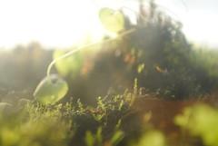 Own devices (Faith.Logan) Tags: plants nikon explore terrarium 2011 d300