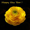 Happy New Year !!!! ♥♥♥ (fifich@t - OFF (disheartened).) Tags: copyright paris france flower fleur yellow panasonic squareformat wishes happynewyear onblack ©copyright squarepicture ©allrightsreserved formatcarré squarephotography ©copyrightallrightsreserved ©tousdroitsréservés magicunicornverybest magicunicorntheverybest magicunicornmasterpieces digimarc2011 lightroomps fifichat1 ©frs fificht ©frs
