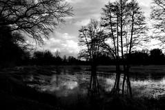 (c-or^^) Tags: trees sky bw nature water clouds wasser meadows himmel wolken sw 1855 reflexion bume spiegelung spreewald alder arbolitos erlen spreewiesen pentaxkr