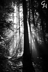 let the light into your heart ... (G.Hotz Photography (busy as a bee =)) Tags: alps austria dornbirn feldkirch sterreich foto fotograf fotografie photographer hard bregenz gerald bodensee bludenz oesterreich vorarlberg hotz ondarena geraldhotz fotolyst
