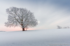 Still (Dylan Farrow) Tags: uk blue winter sunset red snow cold tree fog wales still freezing website pixelpost flickrpost 450d notadded