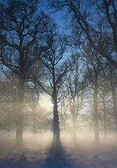 Phoenix Park,  Dublin (Flame1958) Tags: park ireland winter dublin mist tree fog 2010 phoenixpark winterscene 0110 080110