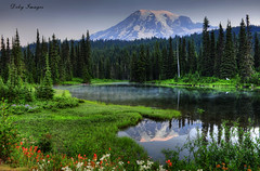 In Memoriam (Deby Dixon) Tags: travel trees summer mountain lake reflection tourism water photography volcano washington nikon glacier adventure wildflowers mtrainier deby allrightsreserved indianpaintbrush mtrainiernationalpark 2011 reflectionlakes debydixon debydixonphotography debyimages