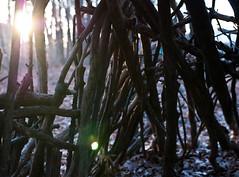 Bleak Winter (Jonathan Y. Lin) Tags: blue winter light sunset shadow sun cold fall leaves lens hope seasons darkness bokeh character roots blues calm lensflare bleak nikkor shelter emergency frigid trials treetrunks longtime calvincollege acheron nikond60 50mmf18g jonathanlin vanreken