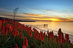 Aloe Vista (Lee Sie) Tags: ocean california sunset sea sky tree water coast pier aloe pacific lajolla agave succulents scripps aloevera ccl barbadensis