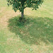 shadow_under_the_tree