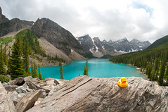 Rubber duck at Moraine lake (Northwest dad) Tags: trees lake snow canada mountains green water beautiful yellow duck nikon rubber fisheye alberta 8mm moraine d300 samyang cozi prooptic