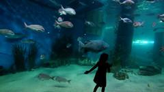 Grouper (@fotodudenz) Tags: fish water digital pen four aquarium underwater under australia melbourne olympus victoria micro 2012 thirds ep1 m43