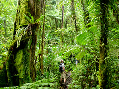 Upland Forest, Pohnpei, Micronesia (ebuechley) Tags: