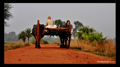 Country Road (achin.biswas) Tags: road red village bullock country wheels magenta cart burdwan ketugram