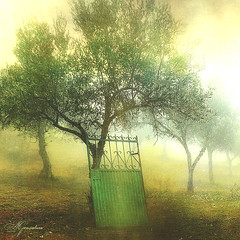 Gate (Transmontano) Tags: tree textura portugal photoshop arvores bragança braganca vilaflor idream xoox theunforgettablepictures transmontano ilustrarportugal spiritofphotography artofimages addvf portugalmagico mygearandme