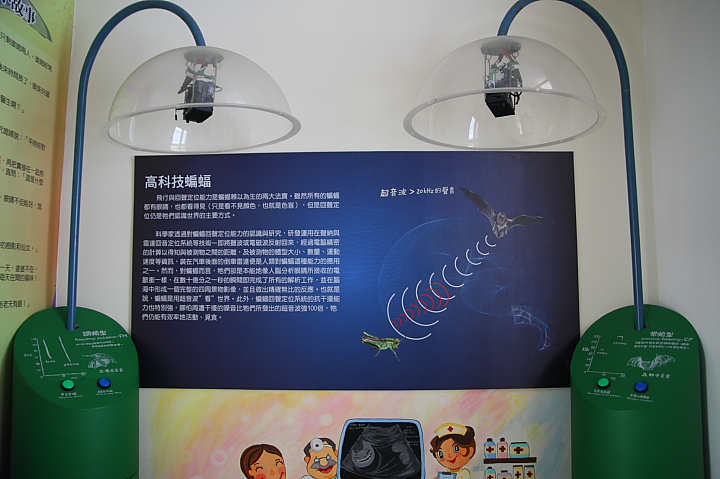 雲林水林黃金蝙蝠生態館(誠正國小)0026