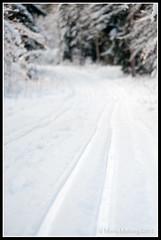 Ski tracks (mmoborg) Tags: winter snow cold tree forest kyla vinter woods sweden skog sverige snö träd 2012 mmoborg mariamoborg