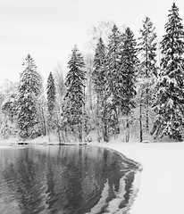 Källstrandsviken (Antti Tassberg) Tags: winter blackandwhite bw snow cold reflection tree ice monochrome espoo suomi finland europe eu scandinavia lumi talvi puu snowscape winterscene jää pitkäjärvi kylmä laaksolahti hanki källstrandsviken ginordicjan12