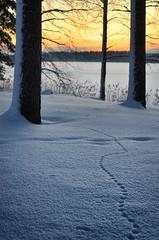 Tracks (Antti-Jussi Liikala) Tags: ginordicjan12