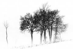 Silenzi invernali (Maver-71) Tags: landscape niceshot neve albero inverno paesaggi freddo appennino appenninotoscoemiliano canon40d appenninosettentrionalealpinatura