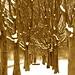 Milano 2012: neve al parco di Trenno