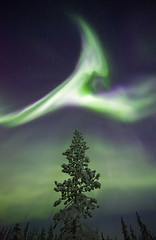 Treetop Aurora, Sweden (antonyspencer) Tags: winter snow storm tree ice pine night forest stars frozen sweden arctic aurora nordic scandinavia kiruna spruce northernlights auroraborealis arcticcircle magneticstorm earthandspace frozenforest bestnewcomer competition:astrophoto=2012