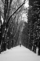 Winter Path (albinobobman) Tags: trees winter white snow man black cold walking