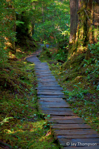 "Boardwalk on the Cape Alava trail near Ozette Lake • <a style=""font-size:0.8em;"" href=""http://www.flickr.com/photos/27893238@N07/6839911073/"" target=""_blank"">View on Flickr</a>"