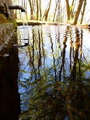 P1000322x (gzammarchi) Tags: italia natura fontana montagna paesaggio bosco riflesso ronco camminata sorgente itinerario moraduccio firenzuolafi selvadiquedina