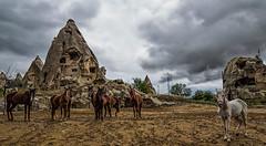 posing horses (muratyldz72) Tags: travel horses horse nature animals turkey pose landscape holidays exposure farm posing cruse cappadocia goreme urgup nevsehir horsefarm samyang canon6d