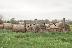 Hay Bales (IRick Photography) Tags: road wood old field animal animals barn rural fence countryside wooden back scenery farm side country farming rustic barns scene haystack farms aged farmer hay bales bale backroad