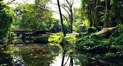 DSC_0807 (The Floating Lens) Tags: kerala backwaters houseboats keralabackwaters naturephotography kumarakom thefloatinglens