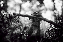 B&W V. (Tams Szarka) Tags: blackandwhite dog pet nature animal forest puppy outdoor boxerdog boxer stick