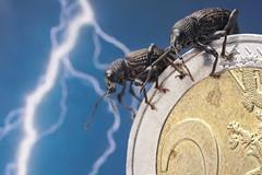 Evil invasion (andre de kesel) Tags: coin euro invasion pests curculionidae focusstack otiorhynchussulcatus macromondays zerenestacker canonef100mm128lisusm meniksw400 smallerthanacoin stagedinsects sonya6300 metaboneseftosonye