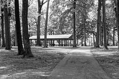 Fitzgerald Park (joeldinda) Tags: blackandwhite bw tree monochrome nikon michigan lawn may parks sidewalk pavilion shadowplay shelter lightandshadow v2 grandledge 2016 fitzgeraldpark eatoncounty 3137 1v2 nikon1v2